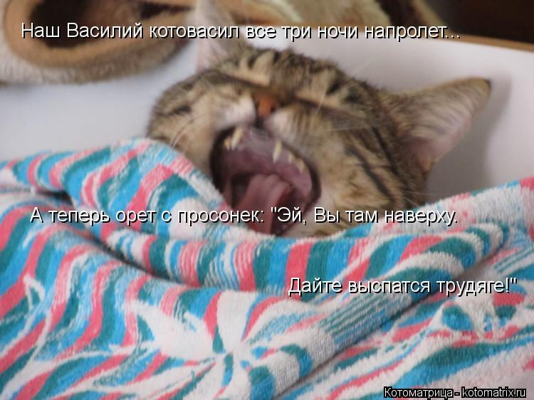 """Котоматрица: Наш Василий котовасил все три ночи напролет... А теперь орет с просонек: """"Эй, Вы там наверху.  Дайте выспатся трудяге!"""""""