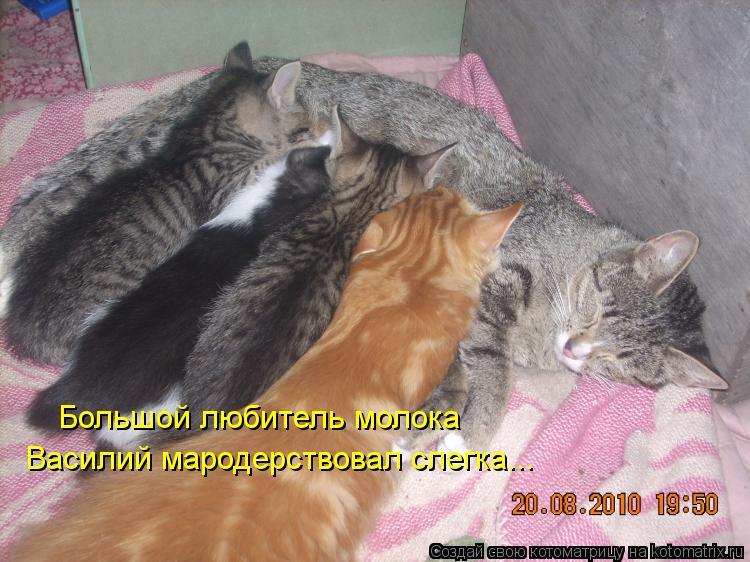 Котоматрица: Большой любитель молока Василий мародерствовал слегка...