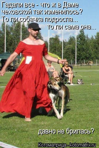Котоматрица: Гадали все - что ж в Даме чеховской так изменилось? То ли собачка подросла... то ли сама она... давно не брилась?
