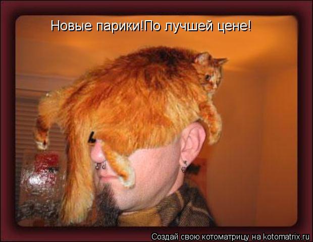 Котоматрица: Новые парики!По лучшей цене!