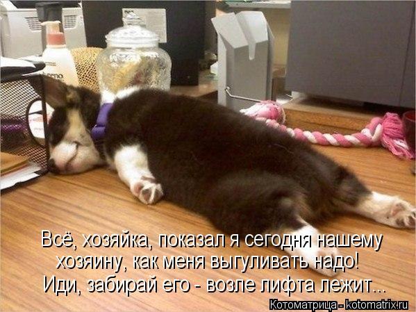 Котоматрица: Всё, хозяйка, показал я сегодня нашему  хозяину, как меня выгуливать надо! Иди, забирай его - возле лифта лежит...