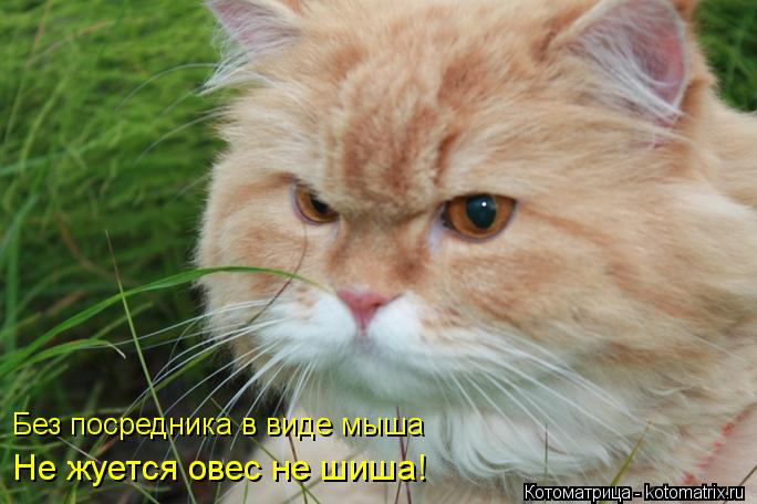 Котоматрица: Без посредника в виде мыша Не жуется овес не шиша!