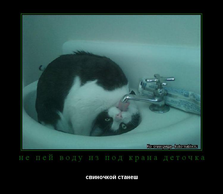 Котоматрица: не пей воду из под крана деточка свиночкой станеш
