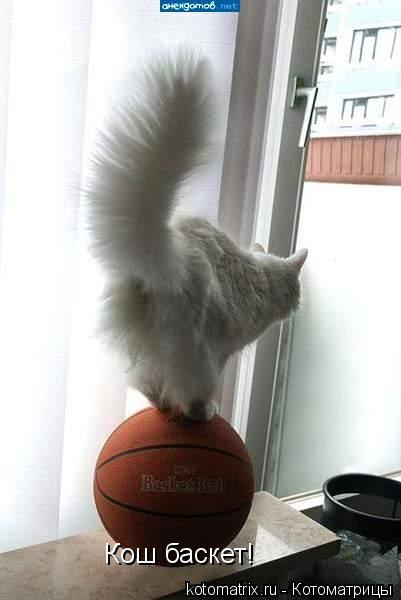Котоматрица: Кош баскет!