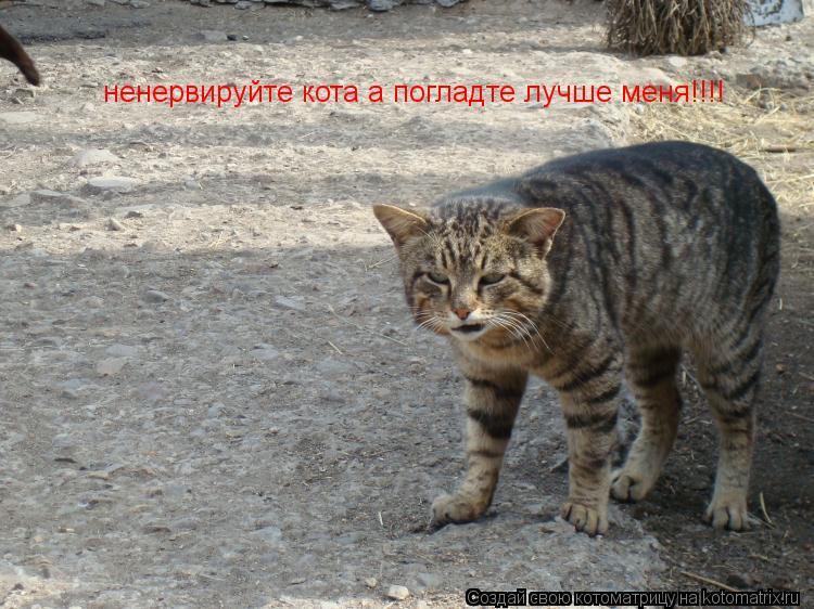 Котоматрица: ненервируйте кота а погладте лучше меня!!!!