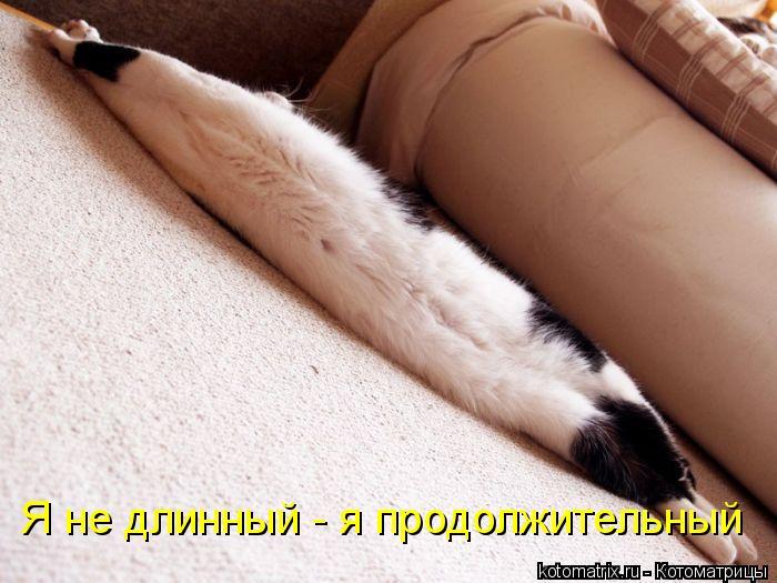 Котоматрица: Я не длинный - я продолжительный