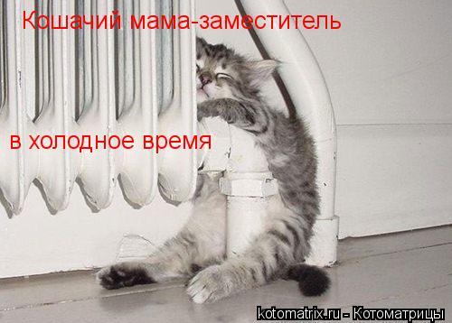 Котоматрица: Кошачий мама-заместитель  в холодное время