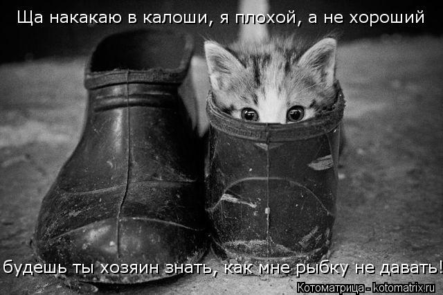 Котоматрица: Ща накакаю в калоши, я плохой, а не хороший будешь ты хозяин знать, как мне рыбку не давать!