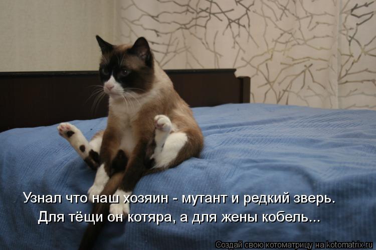 Котоматрица: Узнал что наш хозяин - мутант и редкий зверь. Для тёщи он котяра, а для жены кобель...