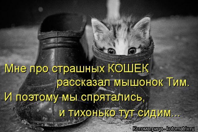 Котоматрица: Мне про страшных КОШЕК  рассказал мышонок Тим. И поэтому мы спрятались,  и тихонько тут сидим...
