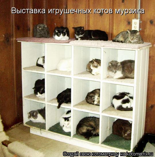 Котоматрица: Выставка игрушечных котов мурзика