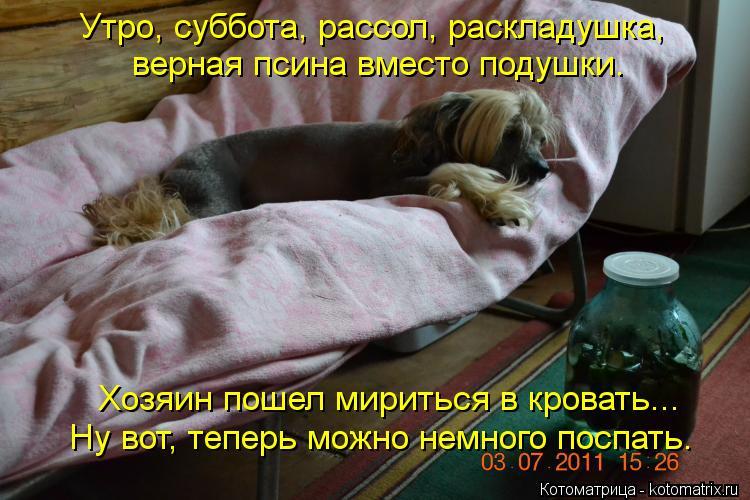 Котоматрица: Утро, суббота, рассол, раскладушка, Хозяин пошел мириться в кровать... Ну вот, теперь можно немного поспать. верная псина вместо подушки.