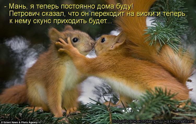 Котоматрица: - Мань, я теперь постоянно дома буду! Петрович сказал, что он переходит на виски и теперь к нему скунс приходить будет...