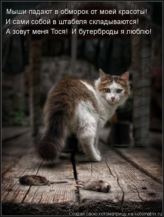 Котоматрица: Мыши падают в обморок от моей красоты! И сами собой в штабеля складываются! А зовут меня Тося! И бутерброды я люблю!