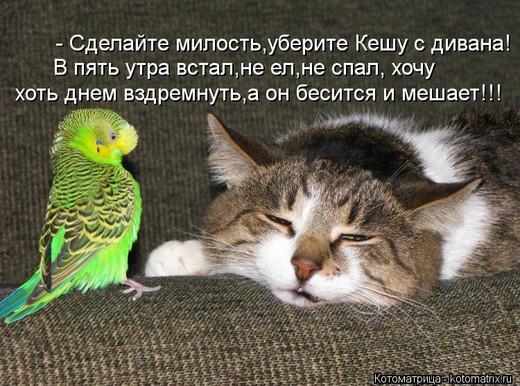 Котоматрица: - Сделайте милость,уберите Кешу с дивана! В пять утра встал,не ел,не спал, хочу хоть днем вздремнуть,а он бесится и мешает!!!