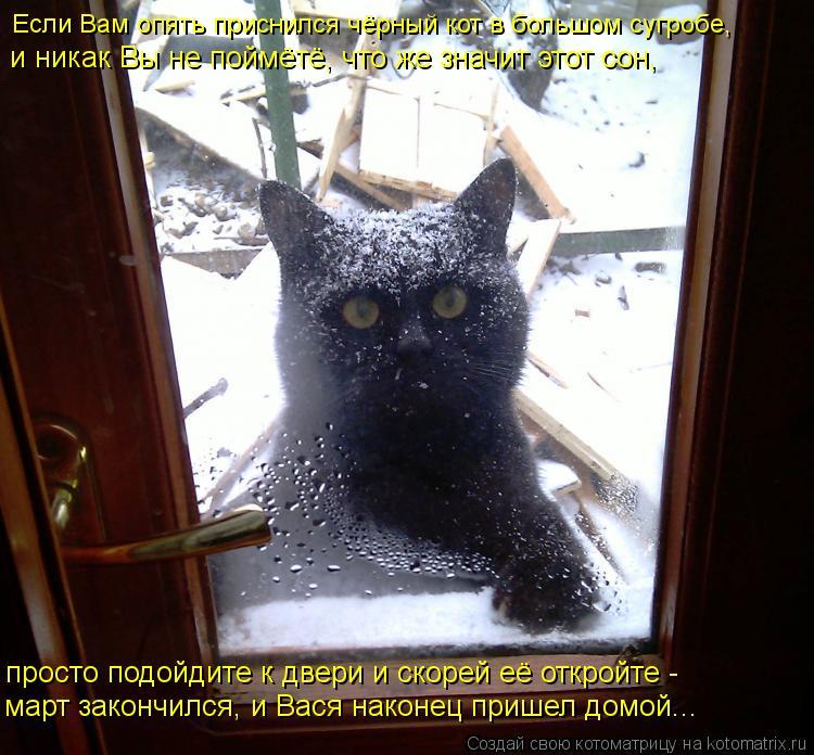 Котоматрица: просто подойдите к двери и скорей её откройте -  март закончился, и Вася наконец пришел домой... Если Вам опять приснился чёрный кот в большом