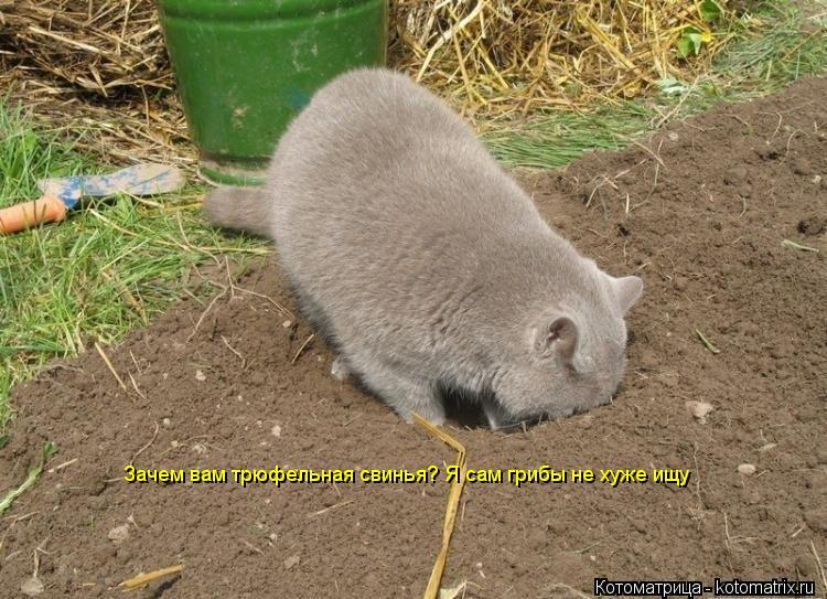 Котоматрица: Зачем вам трюфельная свинья? Я сам грибы не хуже ищу