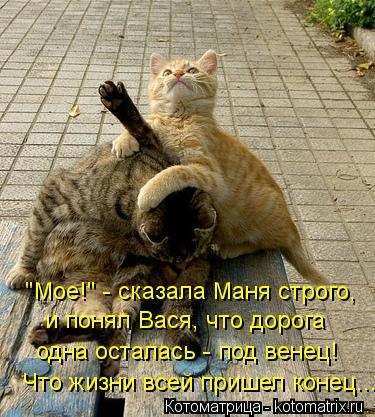 """Котоматрица: """"Мое!"""" - сказала Маня строго, и понял Вася, что дорога одна осталась - под венец! Что жизни всей пришел конец..."""