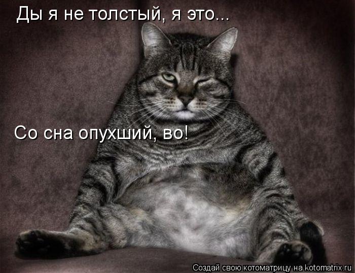Котоматрица: Ды я не толстый, я это... Со сна опухший, во!