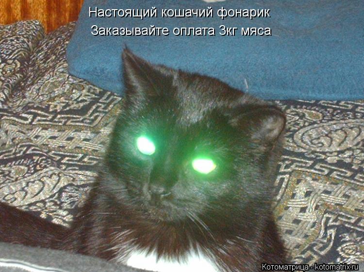 Котоматрица: Настоящий кошачий фонарик Заказывайте оплата 3кг мяса