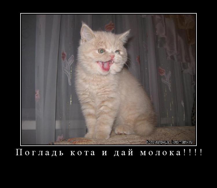 Котоматрица: Погладь кота и дай молока!!!!