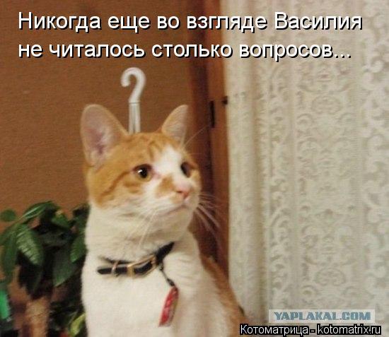 Котоматрица: Никогда еще во взгляде Василия не читалось столько вопросов...