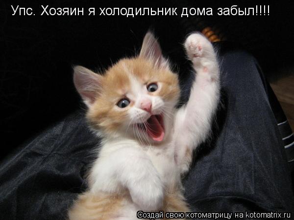 Котоматрица: Упс. Хозяин я холодильник дома забыл!!!!