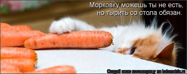 Котоматрица: Морковку можешь ты не есть, но тырить со стола обязан.