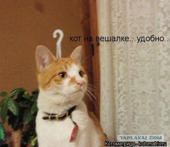 Котоматрица: кот на вешалке...удобно...