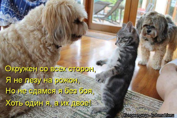 Котоматрица: Хоть один я, а их двое! Но не сдамся я без боя, Я не лезу на рожон, Окружен со всех сторон,