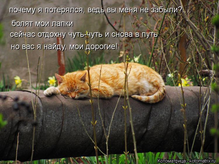 Котоматрица: болят мои лапки сейчас отдохну чуть-чуть и снова в путь но вас я найду, мои дорогие! почему я потерялся, ведь вы меня не забыли?....
