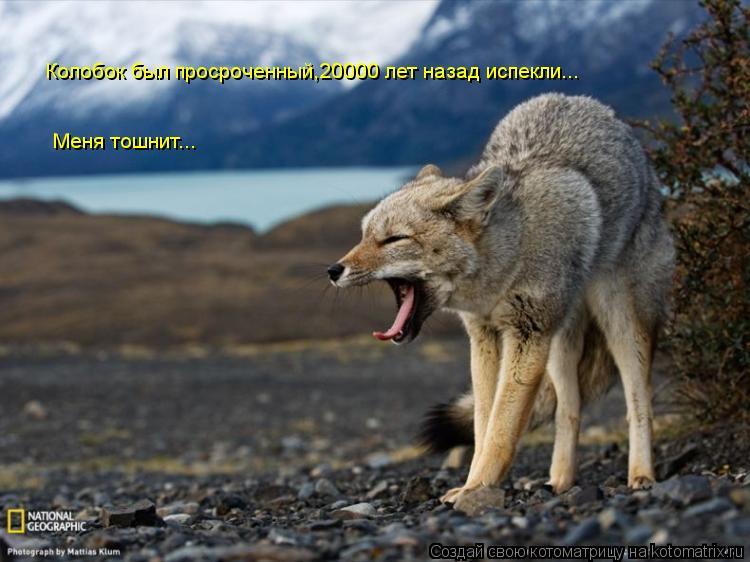 Котоматрица: Колобок был просроченный,20000 лет назад испекли... Меня тошнит...