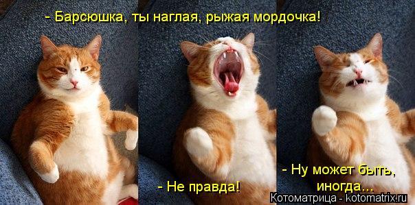 Котоматрица: - Барсюшка, ты наглая, рыжая мордочка! - Не правда! - Ну может быть, иногда...