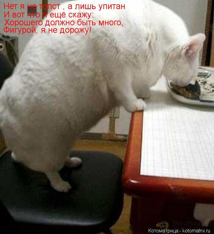 Котоматрица: Нет я не толст , а лишь упитан И вот что я ещё скажу: Хорошего должно быть много, Фигурой, я не дорожу!