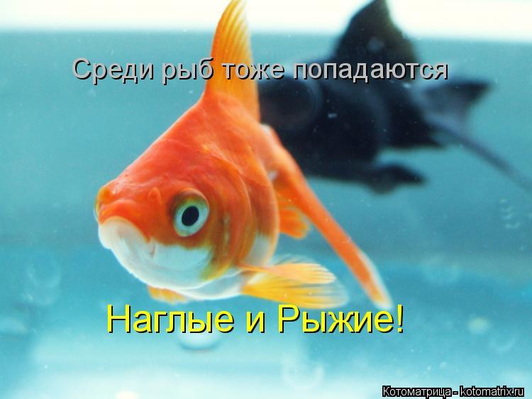 Котоматрица: Среди рыб тоже попадаются Наглые и Рыжие!