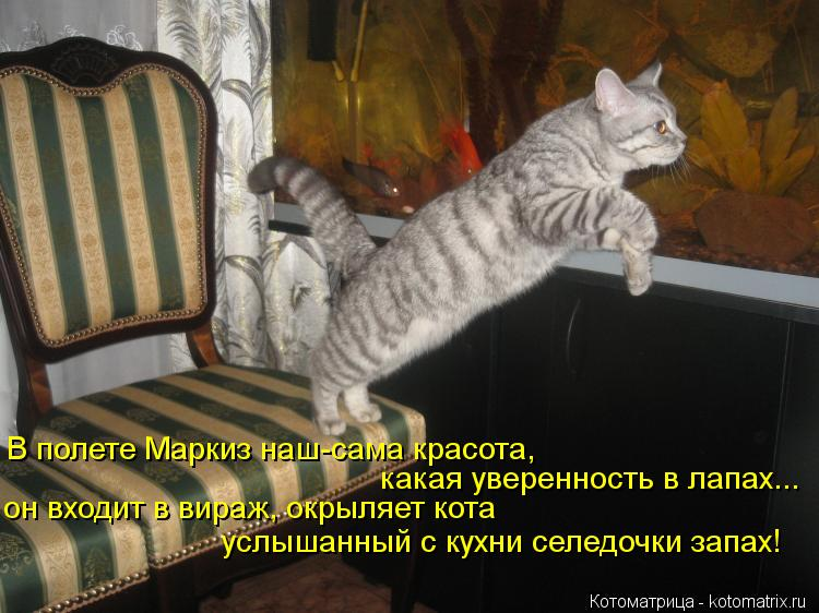 Котоматрица: какая уверенность в лапах...  он входит в вираж, окрыляет кота В полете Маркиз наш-сама красота,  услышанный с кухни селедочки запах!