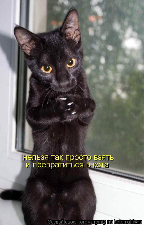 Котоматрица: нельзя так просто взять  и превратиться в кота