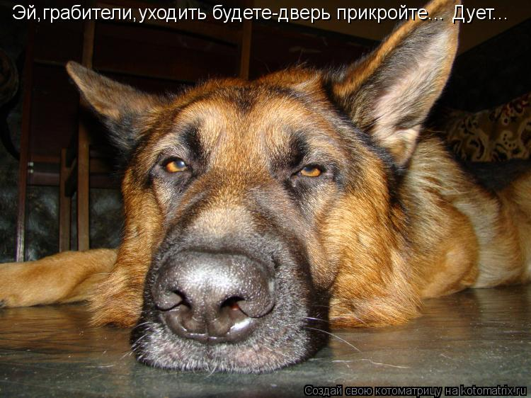 http://kotomatrix.ru/images/lolz/2012/09/07/kotomatritsa_6F.jpg