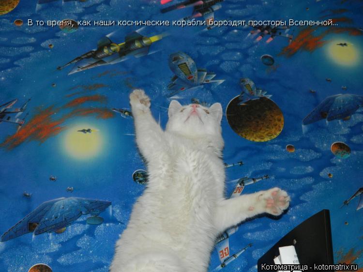 Котоматрица: В то время, как наши космические корабли бороздят просторы Вселенной…
