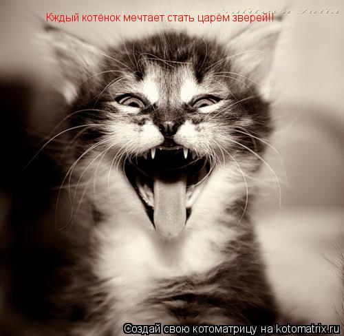 Котоматрица: Кждый котёнок мечтает стать царём зверей!!