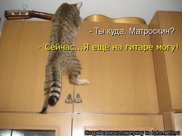 Котоматрица: - Ты куда, Матроскин? - Сейчас...Я ещё на гитаре могу!