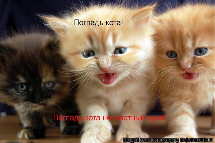 Котоматрица: Погладь кота! Погладь кота несчастный сука!