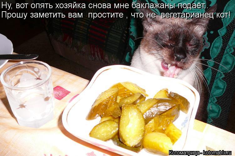 Котоматрица: Ну, вот опять хозяйка снова мне баклажаны подаёт.. Прошу заметить вам  простите , что не  вегетарианец кот!
