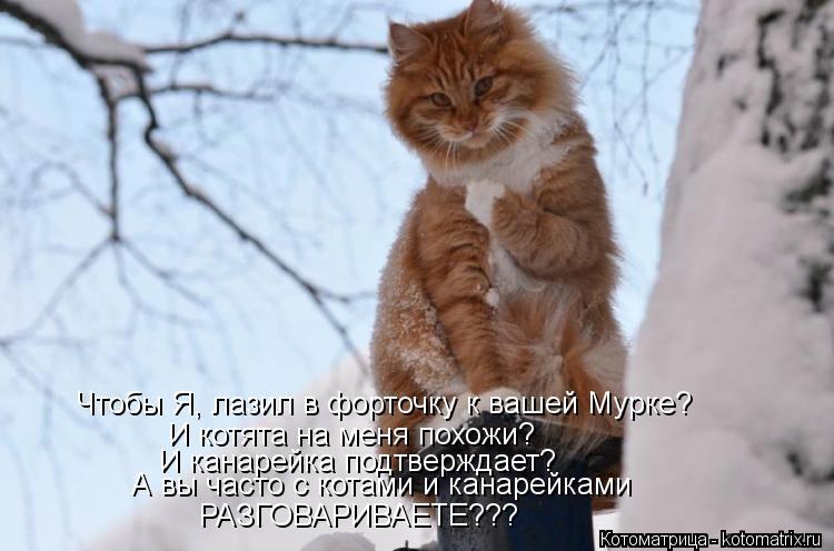 Котоматрица: Чтобы Я, лазил в форточку к вашей Мурке? И котята на меня похожи? И канарейка подтверждает? А вы часто с котами и канарейками РАЗГОВАРИВАЕТЕ??