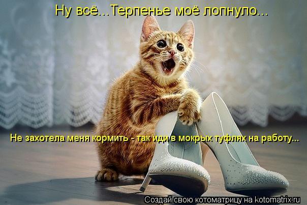 Котоматрица: Ну всё...Терпенье моё лопнуло... Не захотела меня кормить - так иди в мокрых туфлях на работу...