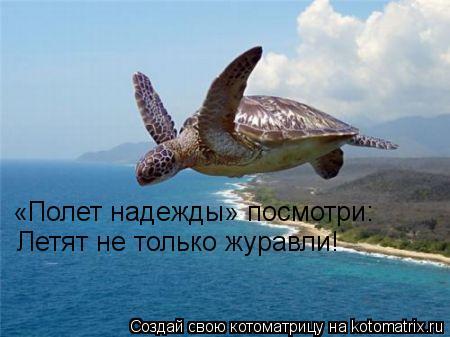 Котоматрица: «Полет надежды» посмотри: Летят не только журавли!