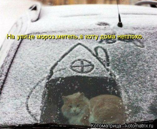 Котоматрица: На улице мороз,метель,а коту дома неплохо.