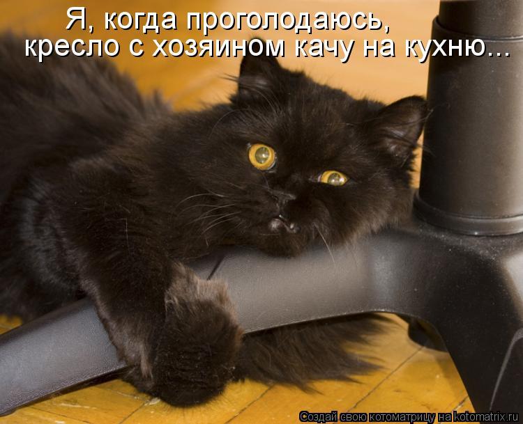 Котоматрица: Я, когда проголодаюсь, кресло с хозяином качу на кухню...