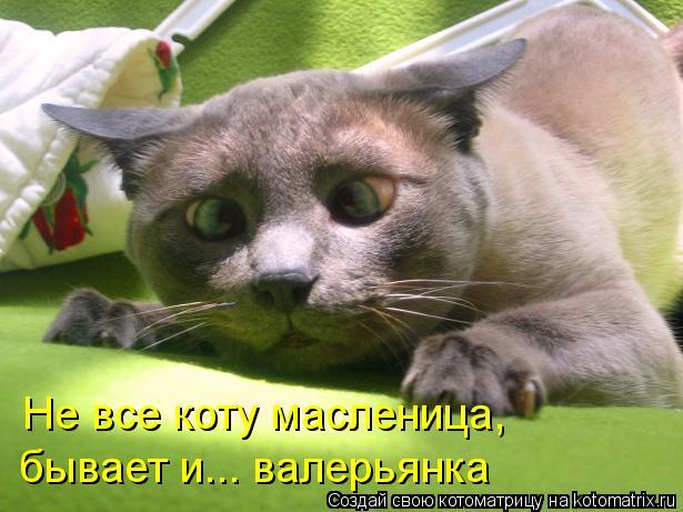 Котоматрица: Не все коту масленица, бывает и... валерьянка