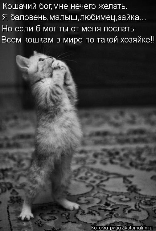 Котоматрица: Кошачий бог,мне нечего желать. Я баловень,малыш,любимец,зайка... Но если б мог ты от меня послать Всем кошкам в мире по такой хозяйке!!!